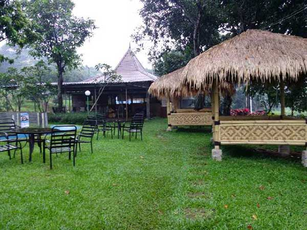 Goeboek-Bamboe-Green-Forest